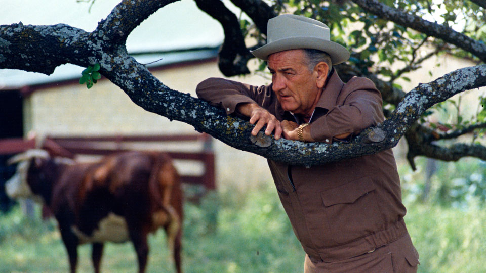 Lyndon Johnson leaning on a tree branch on his ranch with a cow in the background