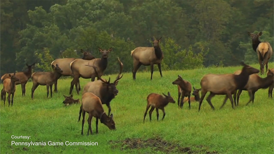Field of Elk