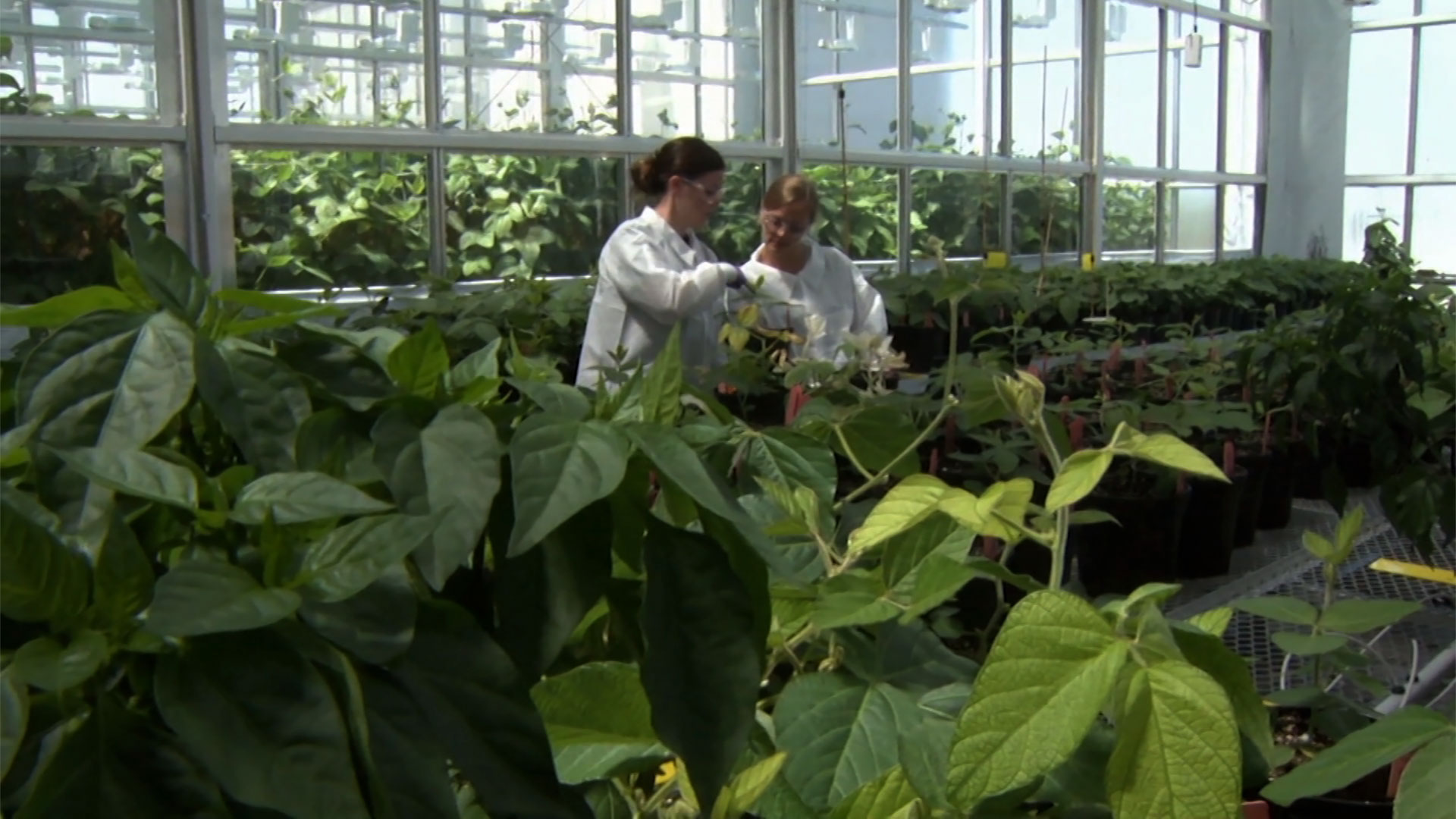 scientists studying plants