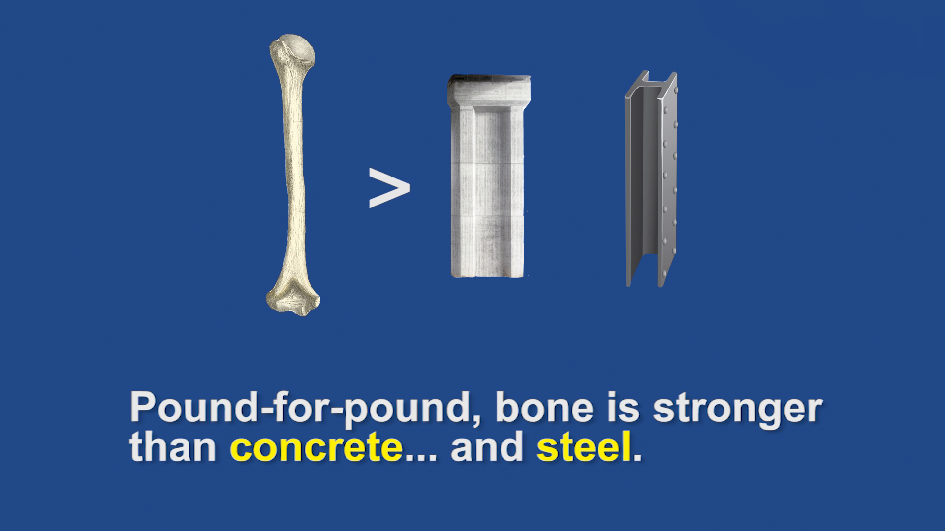 bone is stronger than concrete and steel