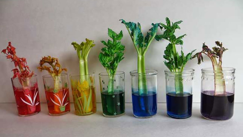 experiment plants drink water