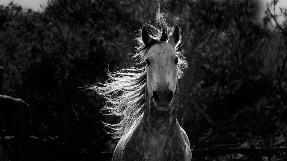 Equus: The Story of the Horse