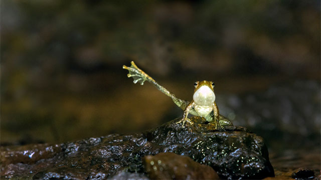 frog with back leg extendend