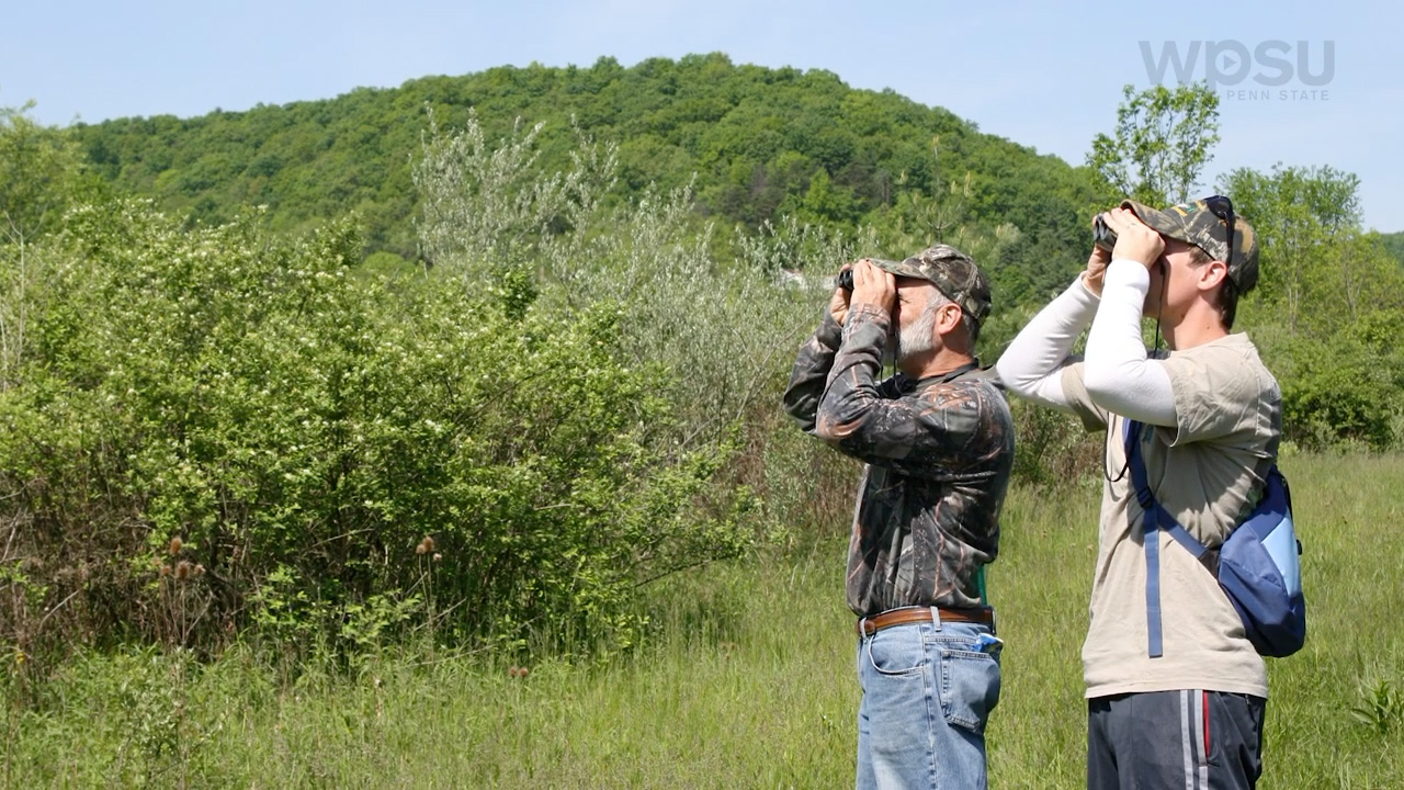 people looking for birds with binoculars
