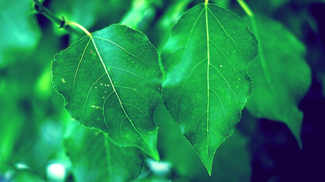 leaves breathe