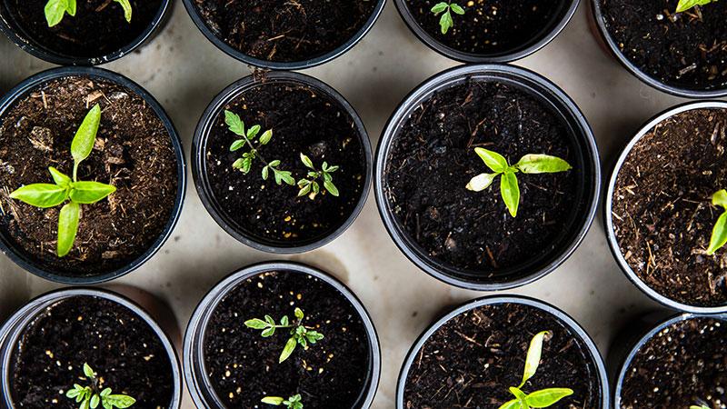 gorwing plants