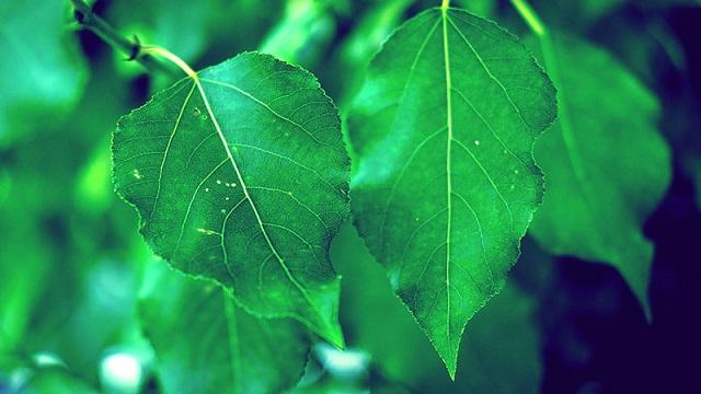 leaves breathing